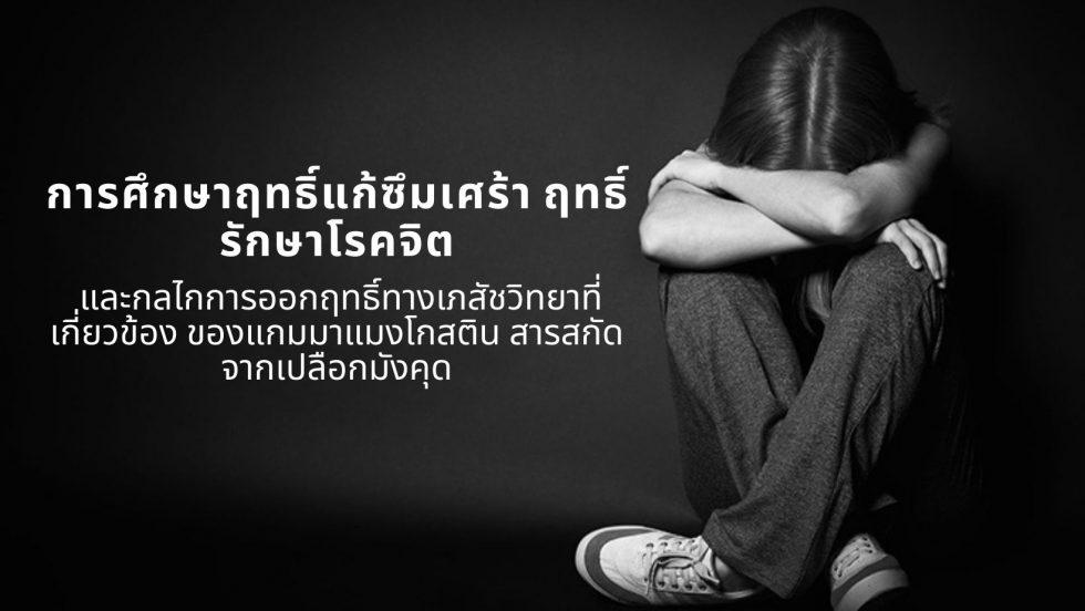 การศึกษาฤทธิ์แก้ซึมเศร้า ฤทธิ์รักษาโรคจิต สารสกัดจากเปลือกมังคุด